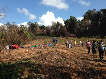 Destroyed by fire, 3 ha of Tanjong Tajam on Pulau Ubin is now being reforested gradually.