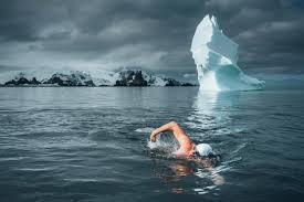 Environmentalist Lewis Pugh swims with polar bears - and icebergs. Courtesy Lewis Pugh.