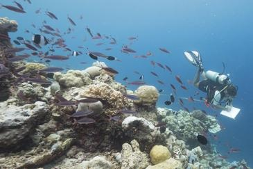 Researchers are continually monitoring reefs around the world. Courtesy Coral Reef CPR.