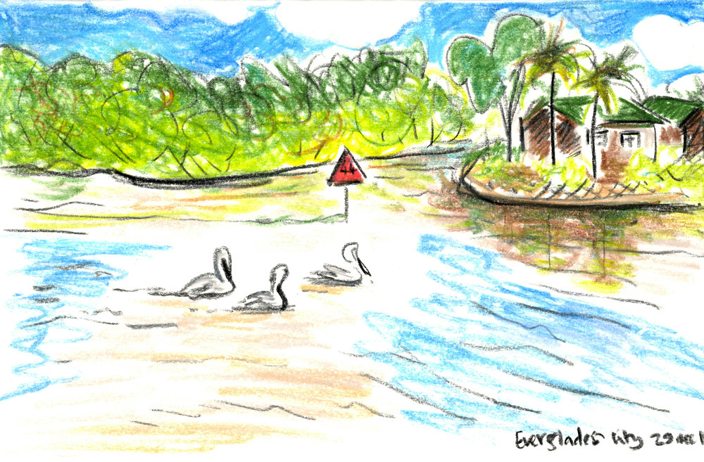 Pelican Everglades.jpg
