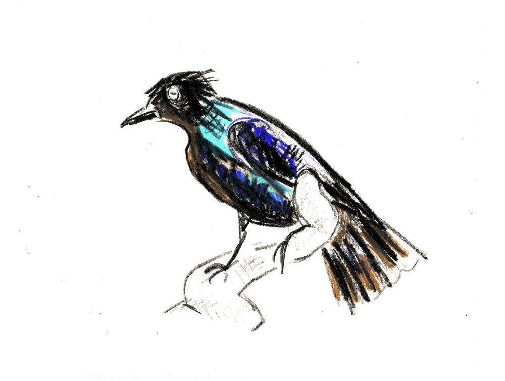 black-blue-bird-WI-web.jpg