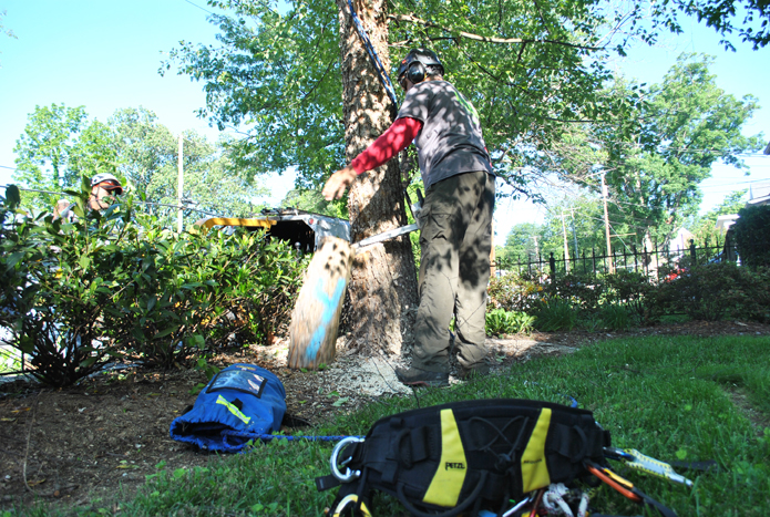 urban_tree_service_gallery_01.jpg