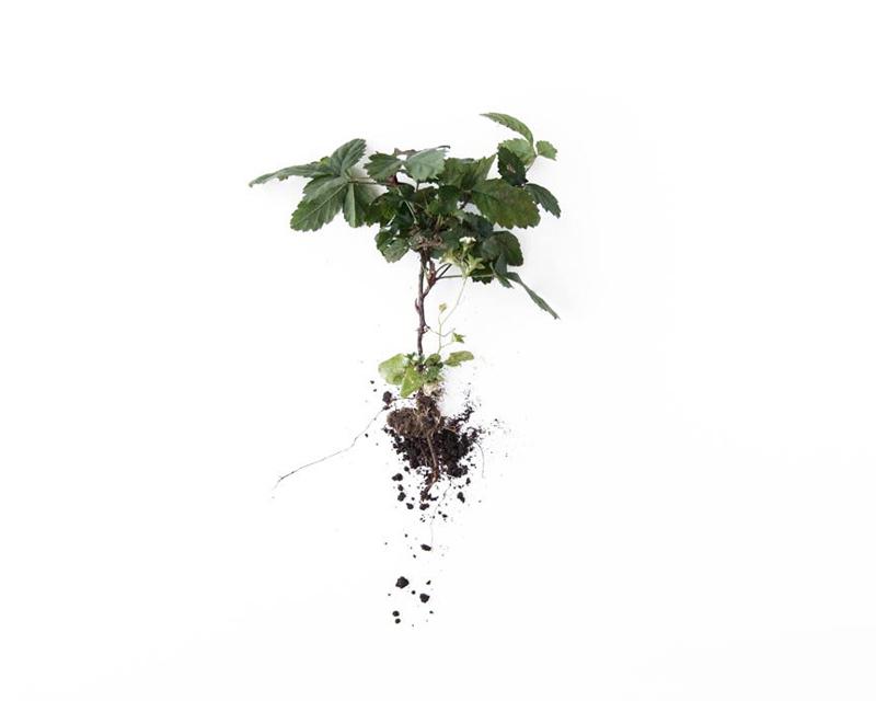 botanical_art_print_1