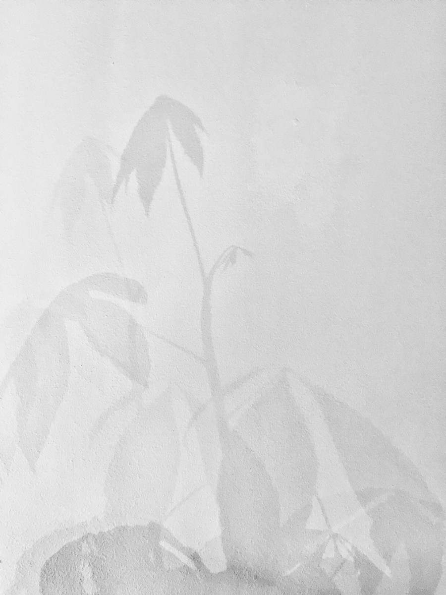 mooiwatplantendoen-aprilandmay-4
