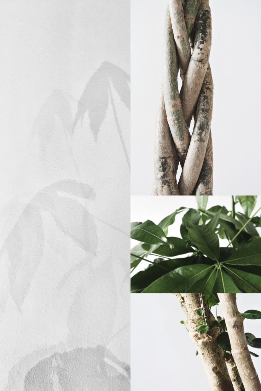 mooiwatplantendoen-aprilandmay-3