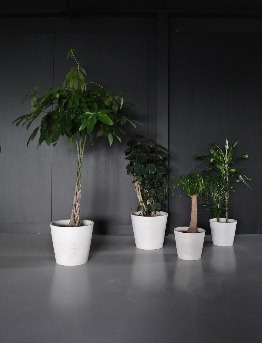 mooiwatplantendoen-aprilandmay-2