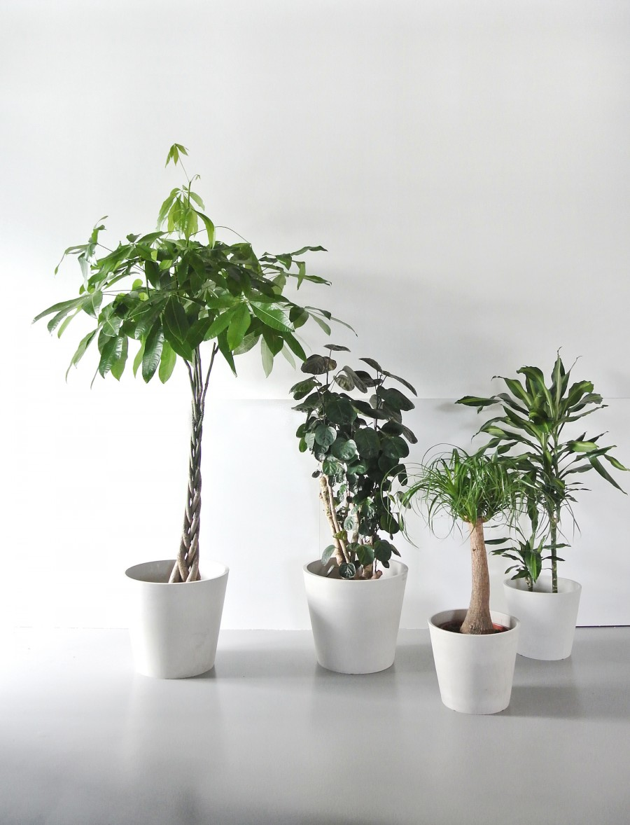 mooiwatplantendoen-aprilandmay