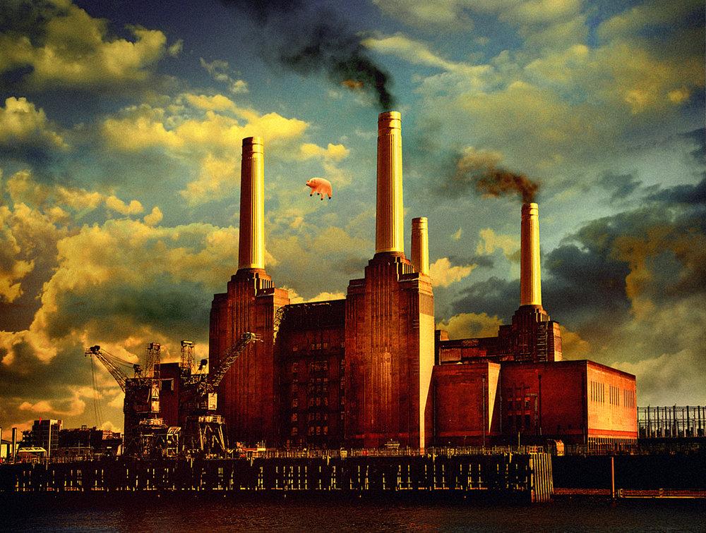 Animals 2011sm.jpg