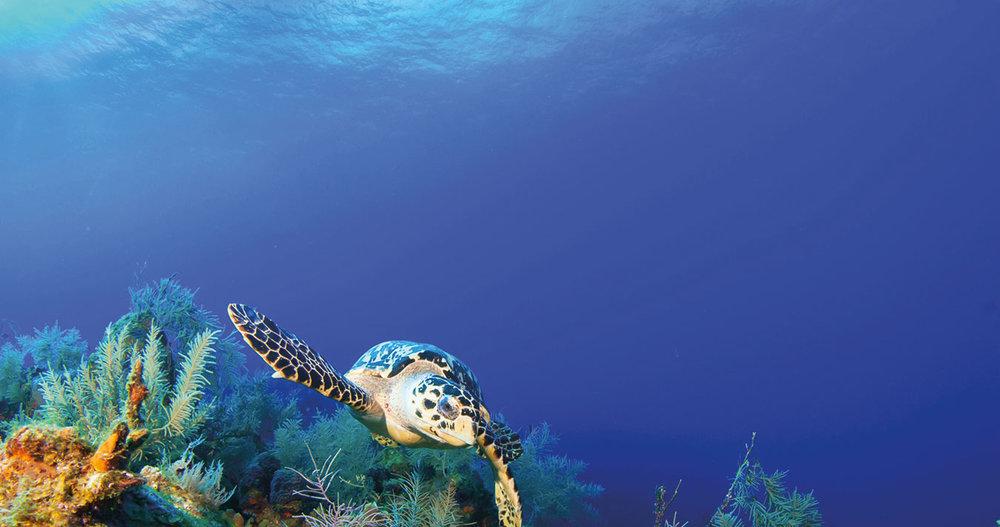 Explore - Maldives | Croatia | Caribbean