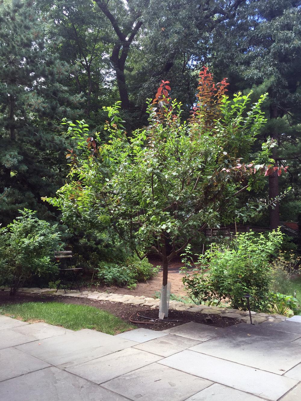 tree_39_2016sm.jpg