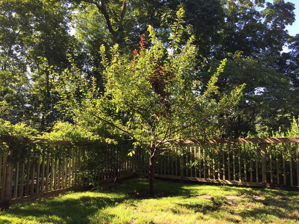 tree_71_2016sm.jpg
