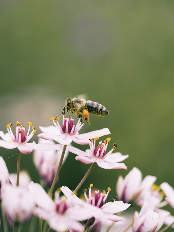 Bee.jpeg