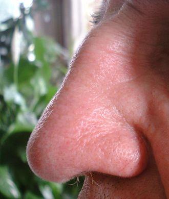 nose.jpg