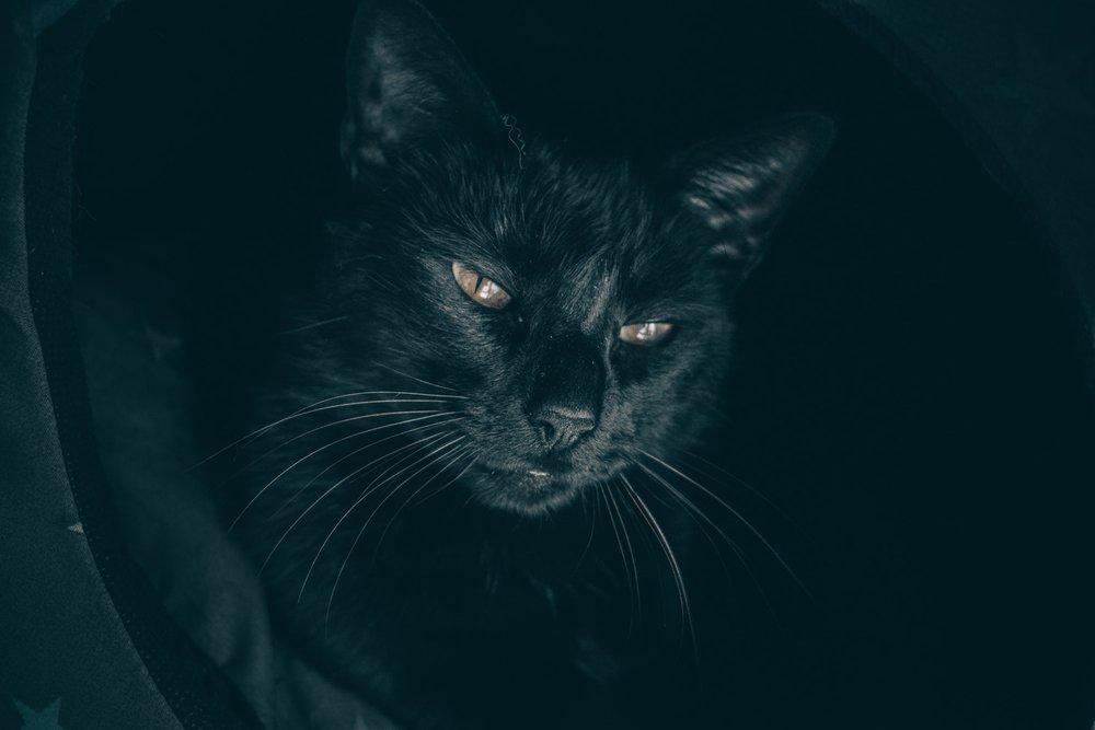 Black_Cat.jpeg
