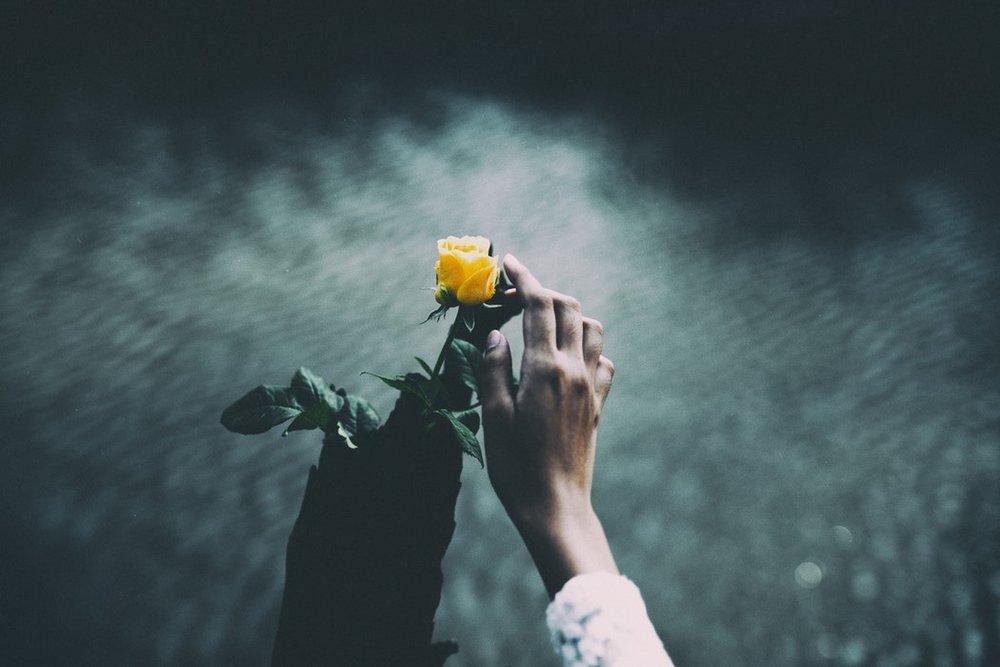 Yellow_Flower.jpeg