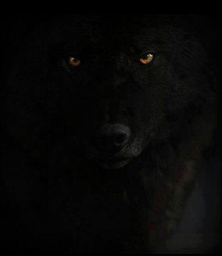 Evil_Dog.jpg