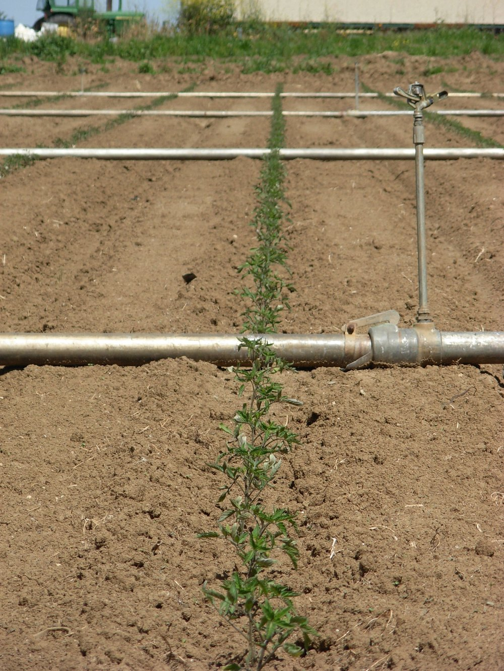 irrigation pipes.JPG