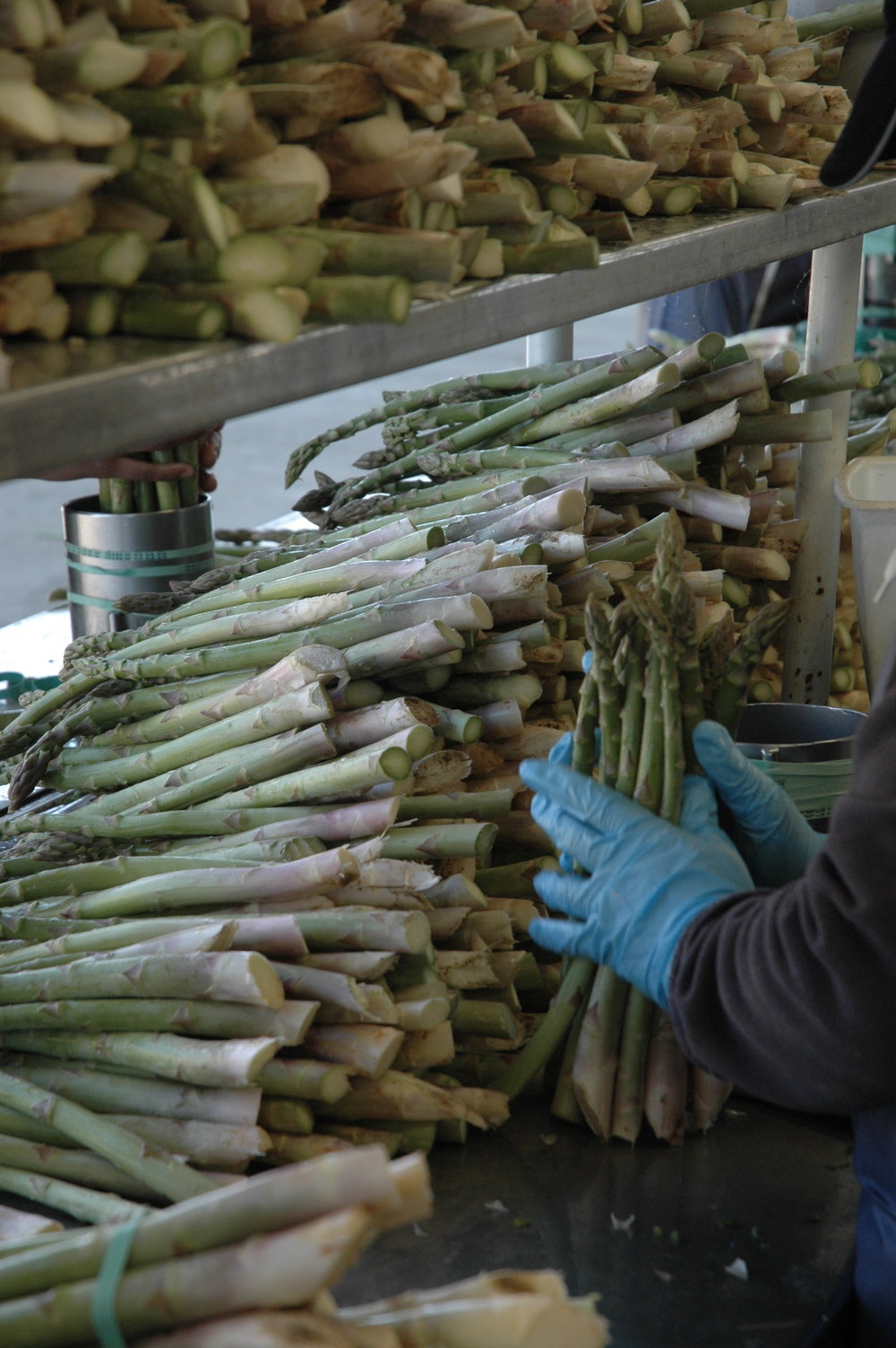 Asparagus Line.jpeg