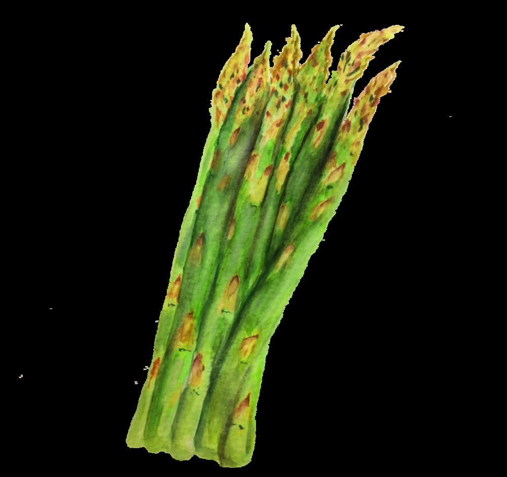 asparagus_watercolor