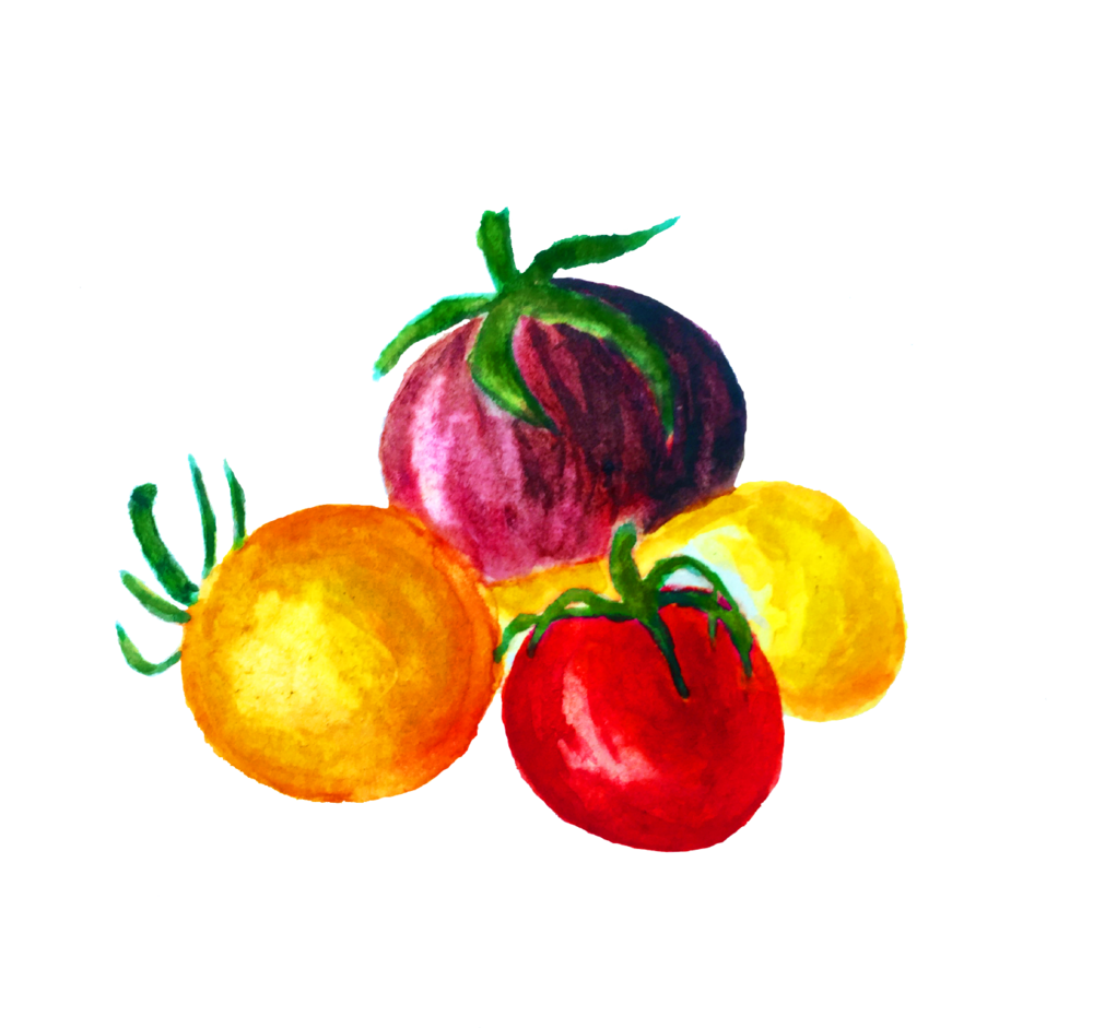 cherry_watercolor
