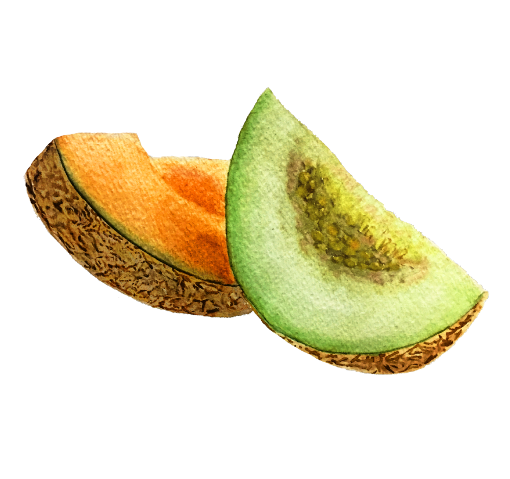 mixed_melon_watercolor