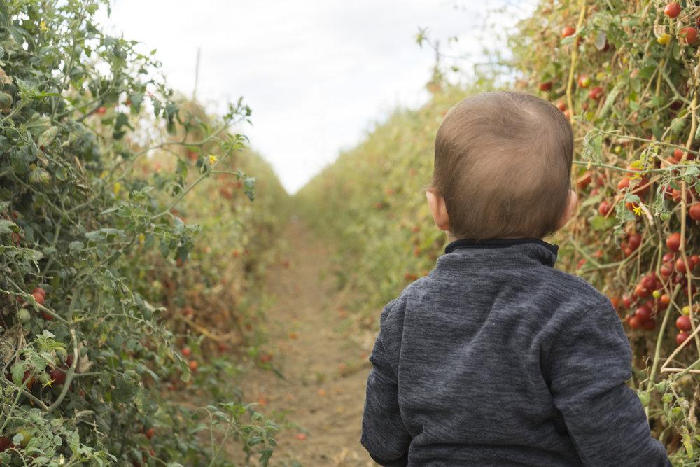 baby in field.jpg