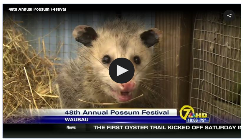 Possum Capture.JPG