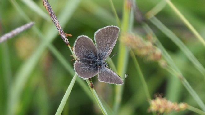 Small Blue, Ireland    BBC NEWS. JUNE 19 2017.