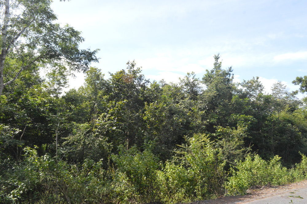 Dry forest in Van Ninh.