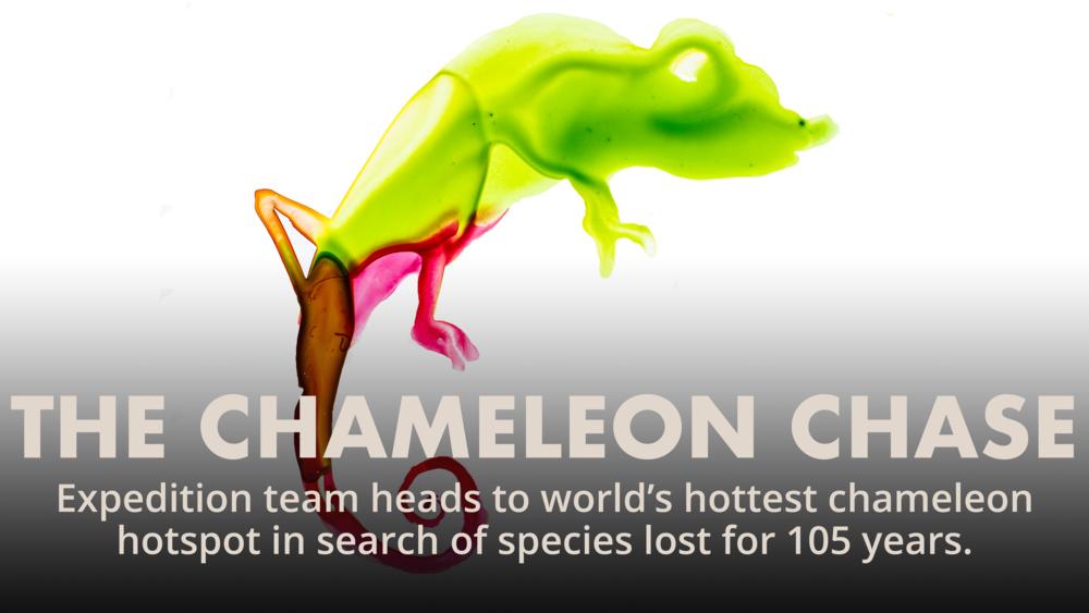LSsliderchameleon.png