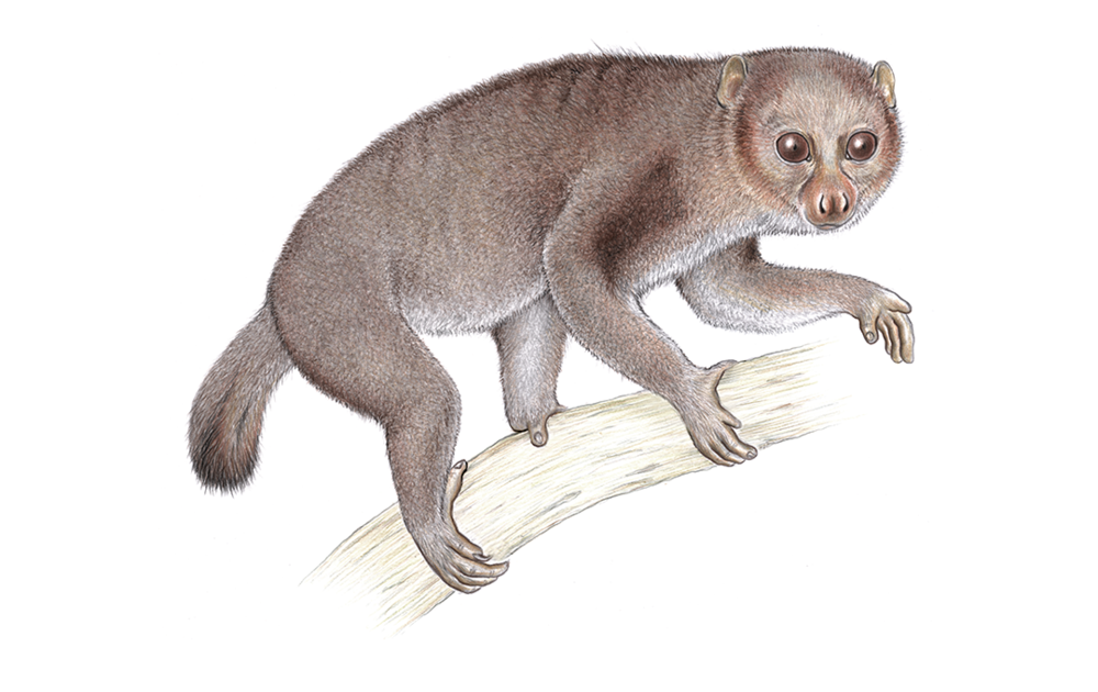 potto.png
