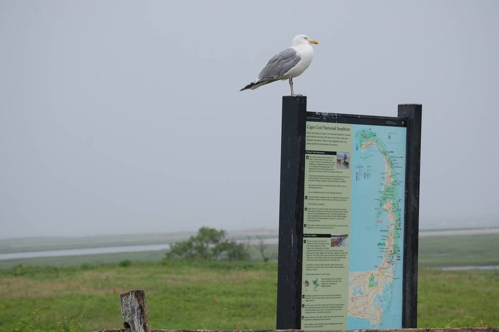 SEAGULL ON FORT HILL SIGN GOOD AIRBNB.jpg