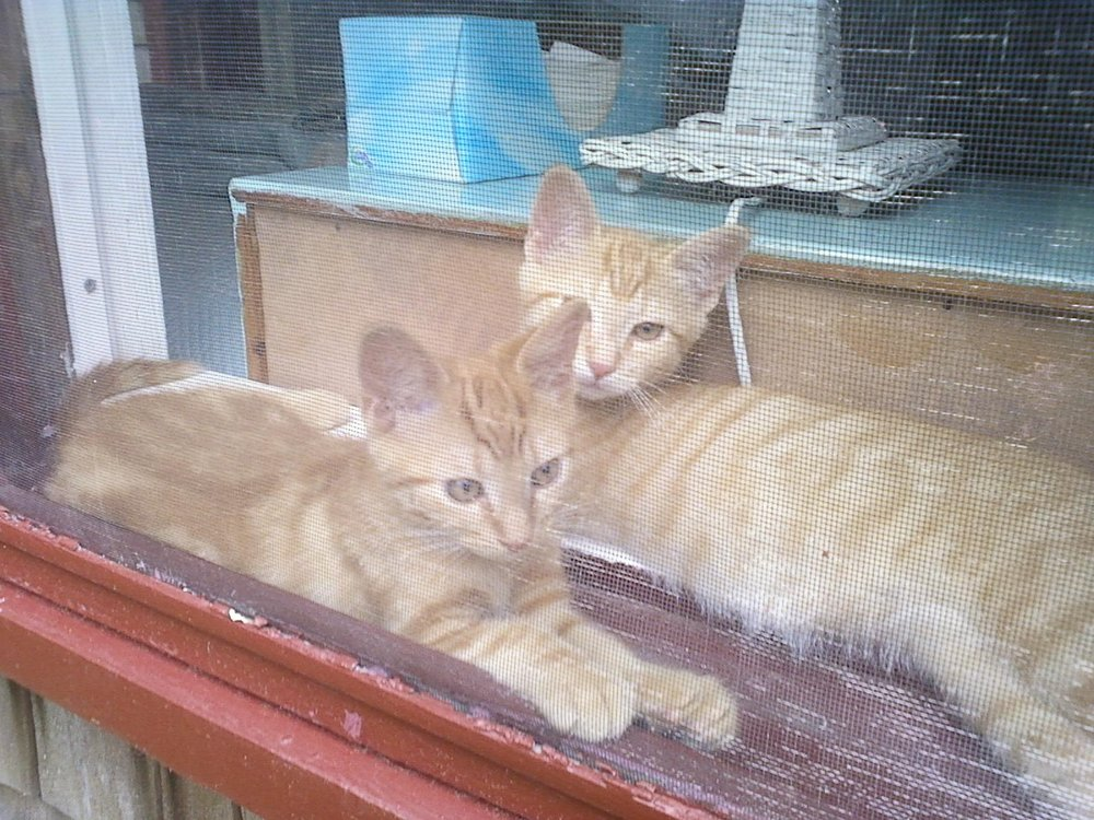 BOTH IN WINDOW WILLIAMS OUTSIDE SHOT.JPG