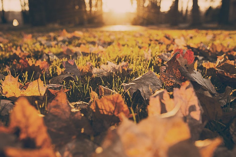 forest-meadow-leaves-autumn.jpg