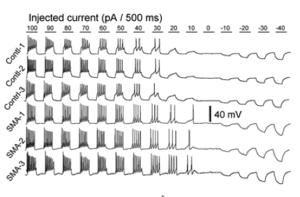 axon potentials.png