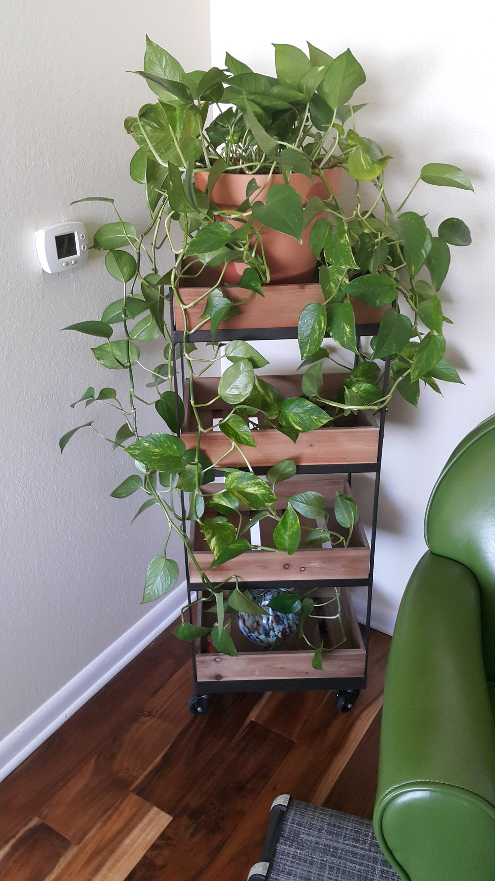 I finally repotted my pothos....she had no soil left and her roots were about 4 inches outside the old pot. (Bad plant Mamma, I know.....). She is happy again.