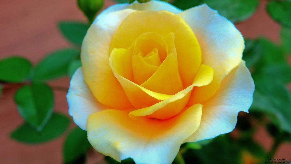hd-flower-images-9515404.jpg