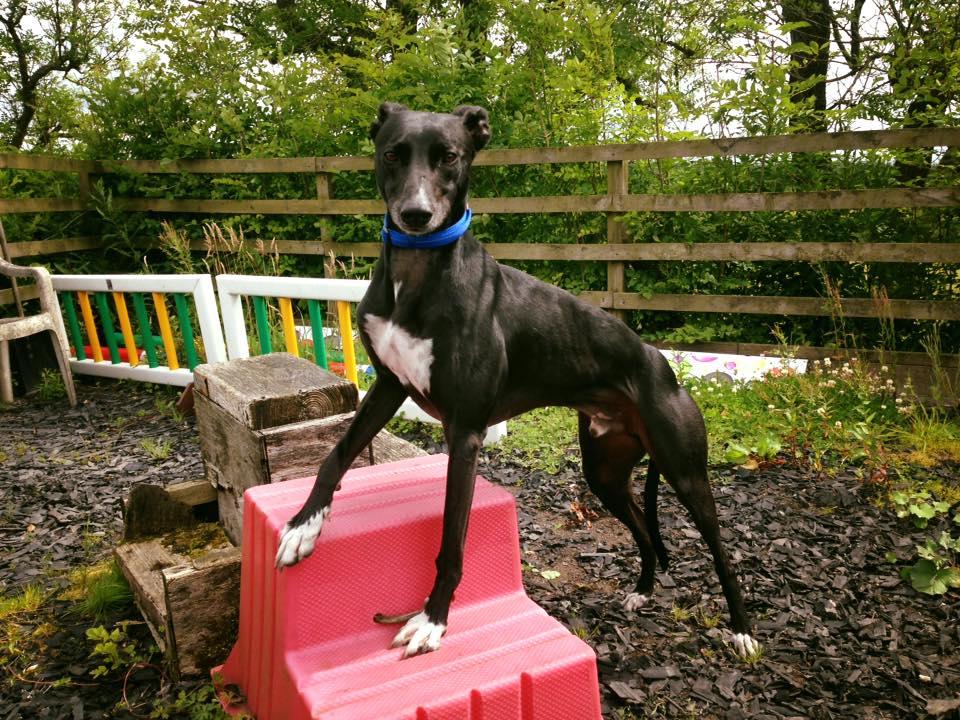 Edinburgh dog training - Beautiful dog on stairs