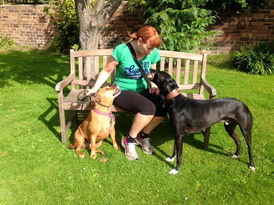 Aggressive dog training - Edinburgh Dog trainer