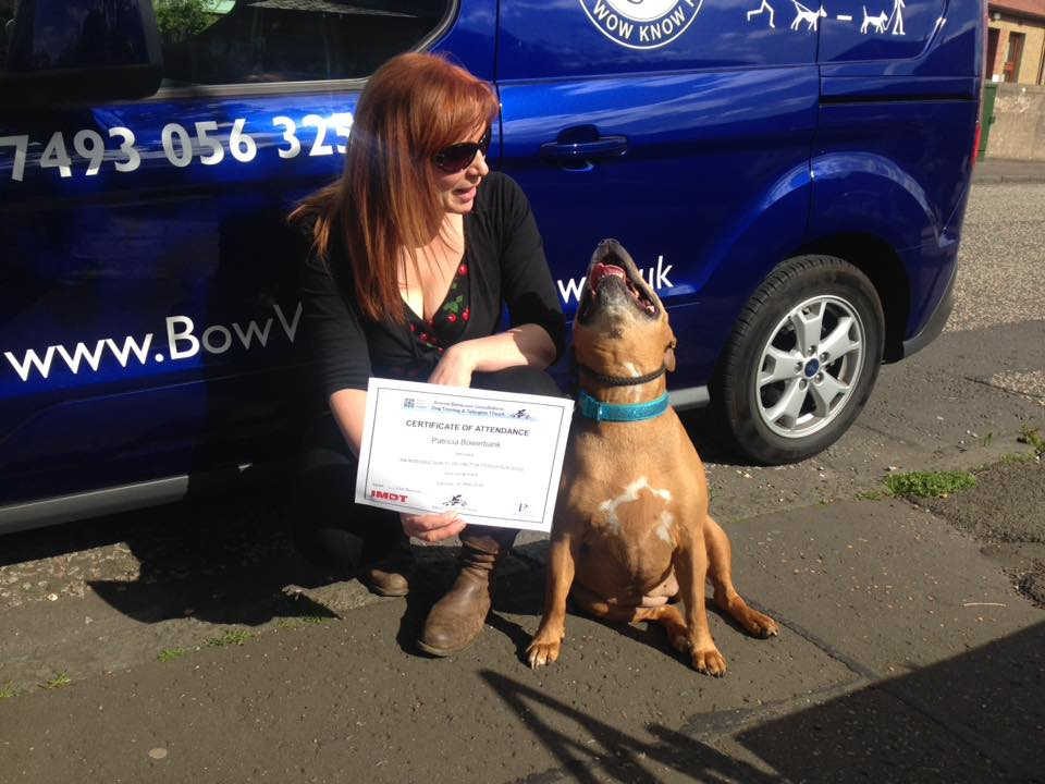 Dog behaviour training - Training certificate award