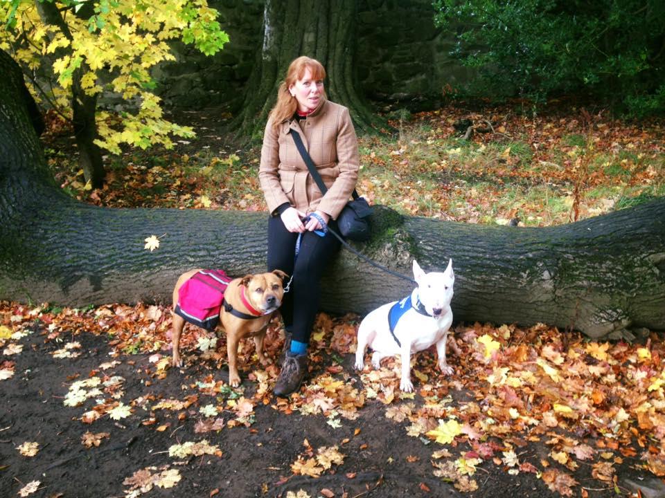 Edinburgh leash training - Sitting on a log