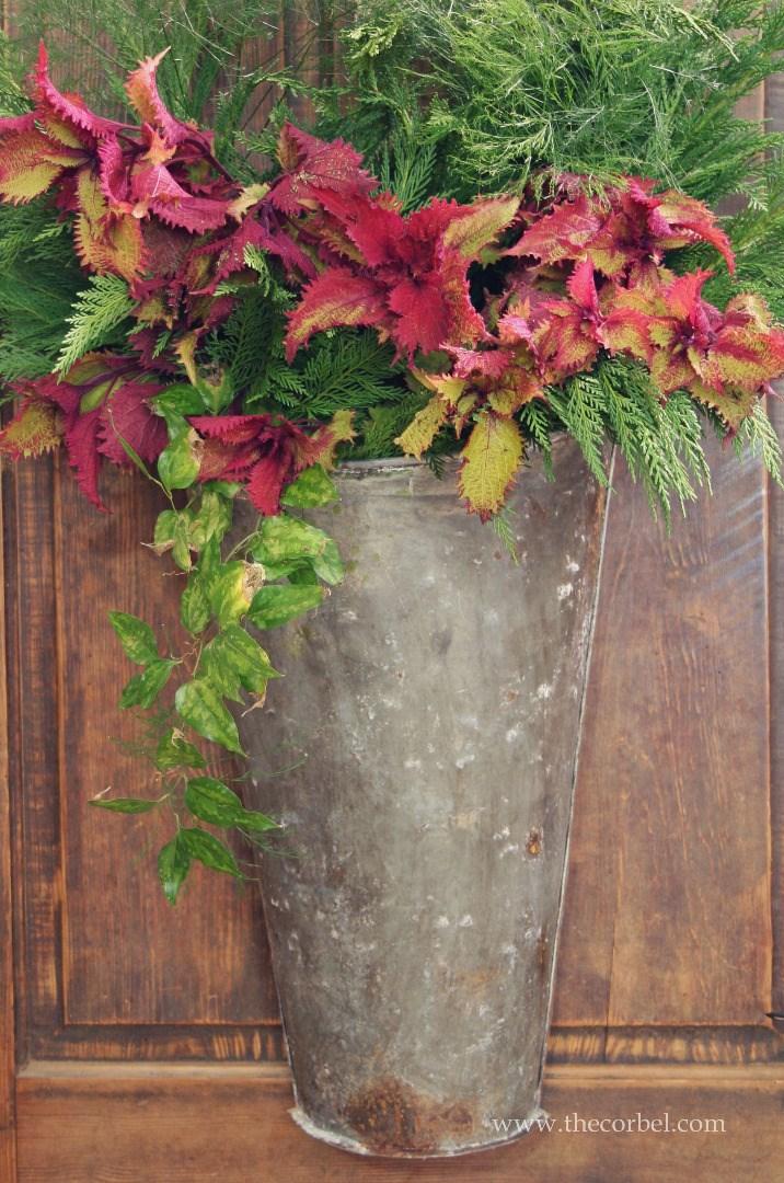 galvanized plant bucket