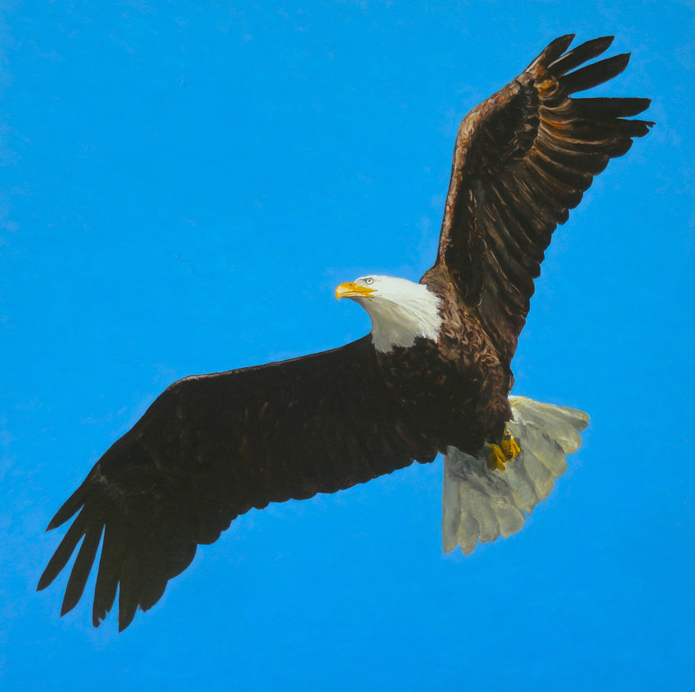 Eagle from the Quabbin