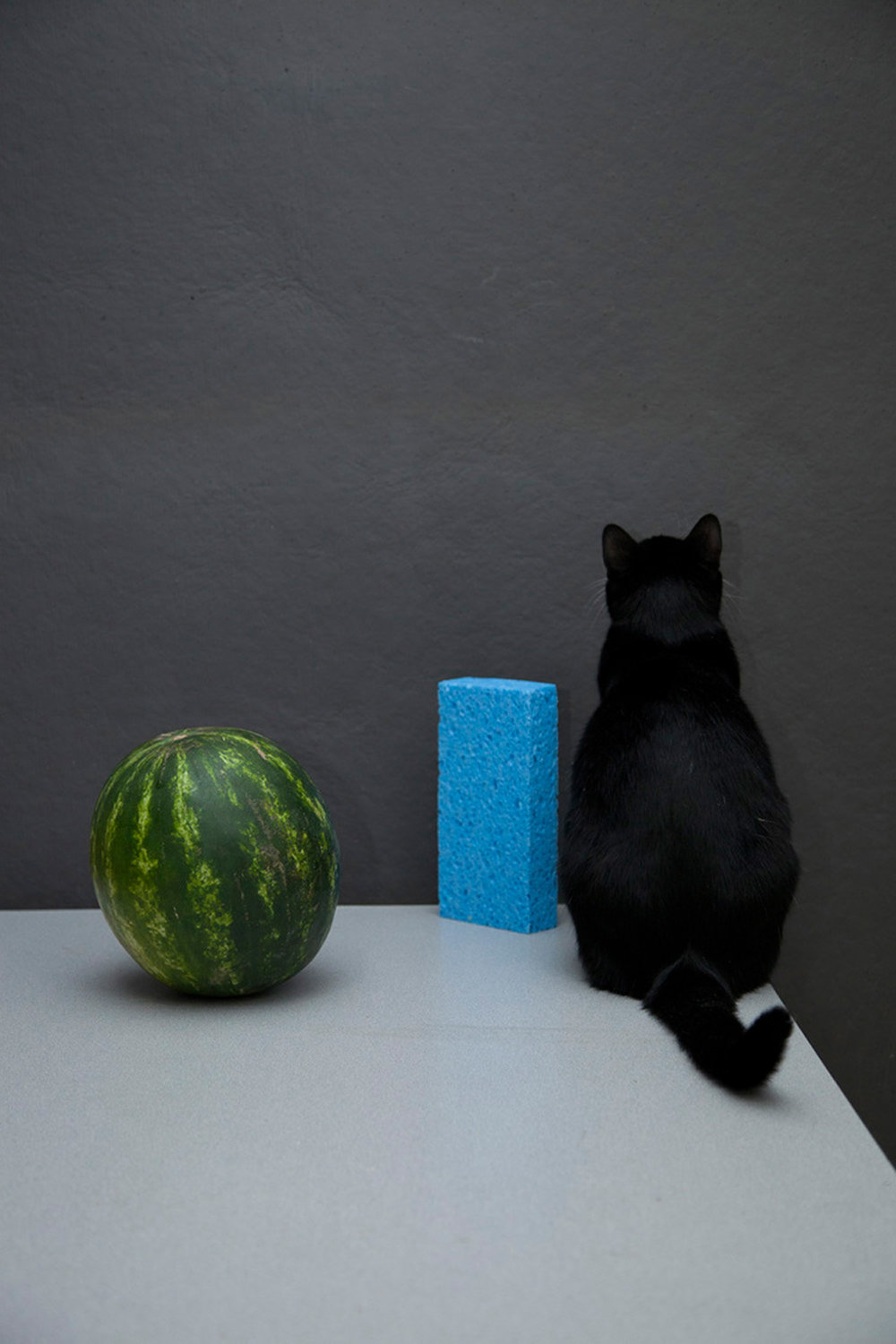 Rayburn and the Watermelon and Blue Sponge