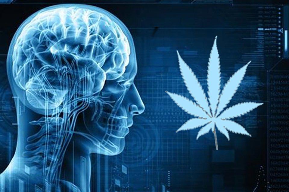 Curaleaf Medical Marijuana Dispensary (Video) - DR. WEINER TALKS LIVE