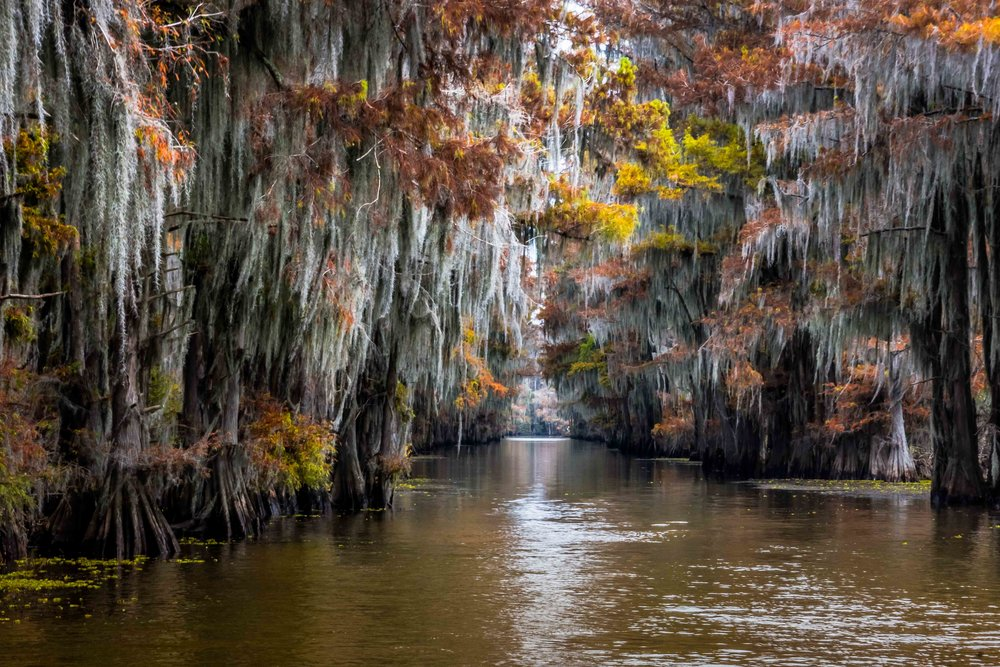 Government Ditch -  Caddo Lake, Texas