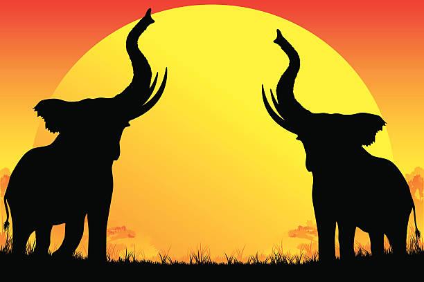 elephants trumpeting.jpg
