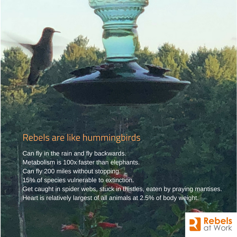 Rebels Hummingbirds.jpg