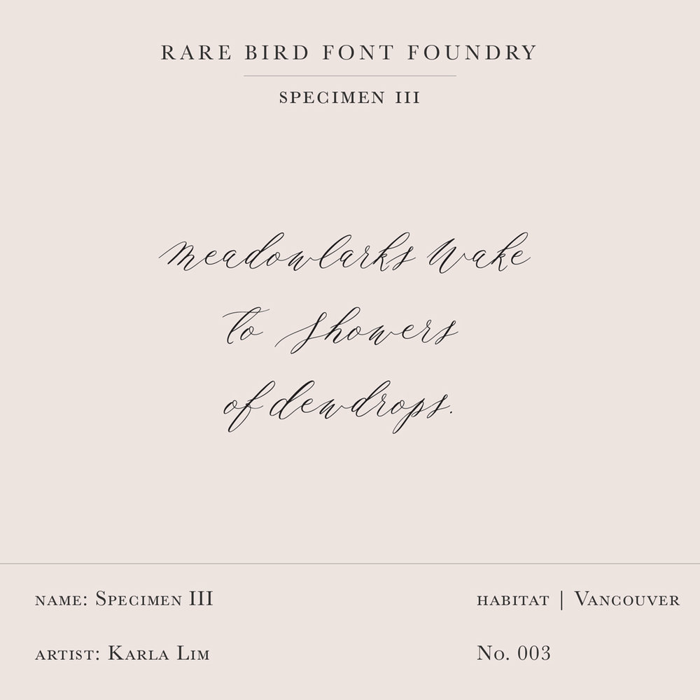 RARE BIRD SPECIMEN III LABEL