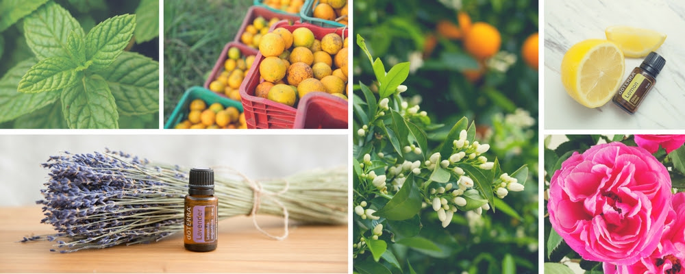 doTERRA February Banner.png